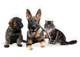 Hirtshals hundepension og kattepension